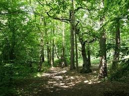 Woodlands open space